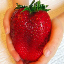 1000 PCS Big Giant Strawberry Seeds, Rare Sweet Four-season vegetable and fruit Seeds, Garden plants(China)