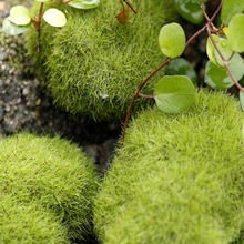 Artificial mini Moss Stones Grass Home Garden Bonsai Decoration For Garden Path Home Decor Micro-landscape decoration