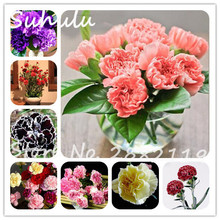 Cheap 10 pcs Carnation Seeds Perennial Beautiful flowers 16 Colors Available diy home garden attractive light up your garden