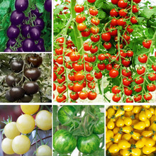*200pcs 24 KINDS Tomoto Seeds mixed packed Purple Black Red Yellow Green Cherry Peach Pear Tomato Seed Organic Food for Garden