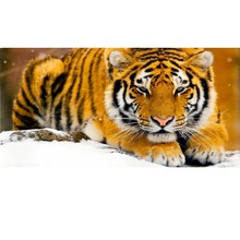 5d diy diamond embroidery tiger pictures needlework diamond painting cross stich animals patterns Fully Resin round rhinestone