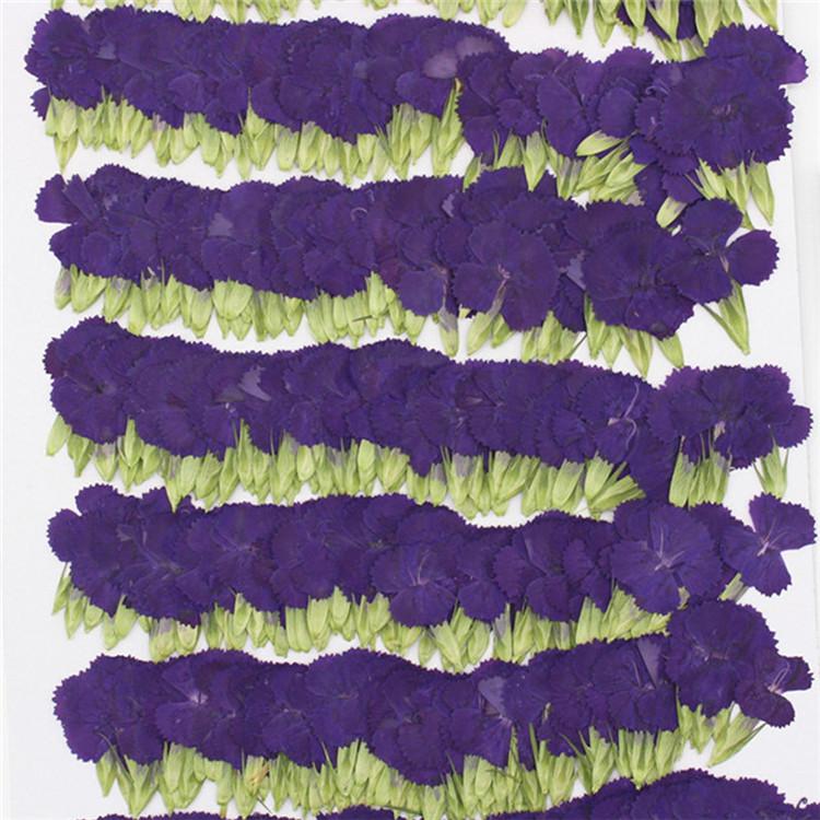 Purple-2_