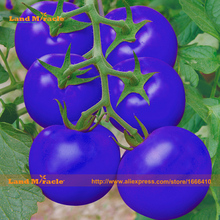 New Variety! Large Truss Tomato Vegetable Seed, 200 Seeds/Pack, Bonsai Blue Tomato Tree Seed Non-GMO Fruit Seed-Land Miracle