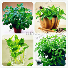100pcs/bag Lemon Mint Seeds,potted herb and plants seeds four seasons seeds edible plant(China)