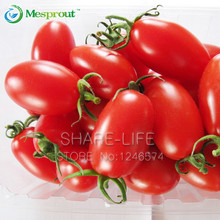 100PCS Red cherry tomatoes Seed Balcony Fruits Vegetables Bonsai Potted Plant Seeds Tomato Seeds