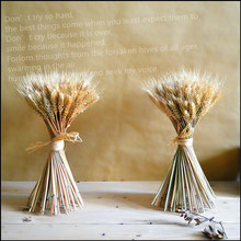 Holding a bouquet of dried wheat wheat barley placed bouquets of dried flowers coffee table home decoration