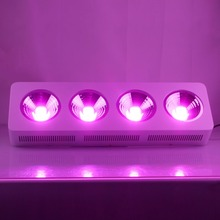 populargrow Factory Promotion Hot sale 800w COB Led Grow Light with 100% quality warranty for all stages of plants(China)