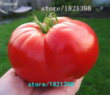 50pcs/bag Rare Beefsteak Tomato Seeds DIY Vegetable bonsai plants for home garden Free Shipping(China)