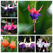 fuchsia ,cheap fuchsia seeds, Bonsai balcony flower, fuchsia potted seed - 100 pcs/bag