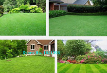 Lawn Seed 500pcs Grass Seeds Fresh Green Soft Runner Natural Plant Free shipping