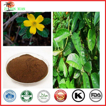GMP Factory 100% Natural Damiana Leaf Extract For Herbal Medicine Powder