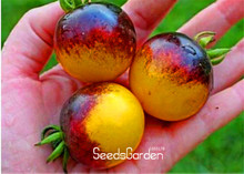 Hot Sale!Vegetable seeds,VERY RARE BUMBLE BEE HEIRLOOM TOMATO! LOW ACID 50 PCS/Pack Mini fruit vegetable garden,#HCPAAN