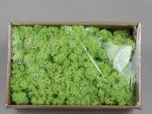 Free shipping,200g,Eternal moss eternal seaweed flower gift box key chain car hanging accessories micro-landscape green wall