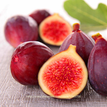 100pcs figs Seeds,Edible Fruit Bonsai Tree Seeds, rare red figs Seeds(China)