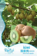 30 PCS original packaging Kiwi fruit seeds, Potted the plants, MIN tree Nutrition is rich, beautiful, Bonsai