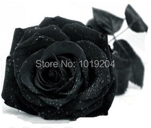 Free shipping,200 seeds of Japan's rare black rose seeds, bonsai plants