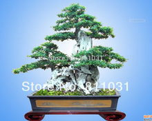 Hot selling 30pcs Butt Ash seeds bonsai seeds DIY home garden Tree Seeds Plant free shipping(China)