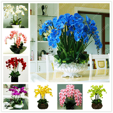 50 pcs/bag bonsai flower orchid seeds, beautiful phalaenopsis orchid home garden plant orchid pot quality flower seeds kids gift(China)