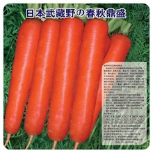 Spring And Autumn Heyday Carrot Seed 100 Seeds G Organic Vegetable Seeds(China)