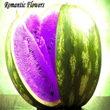 Gaishuliang A Package 50 Pieces Seeds Rare Purple Fresh Watermelon Seeds Super Big Water Melon Seeds Succulent Plant