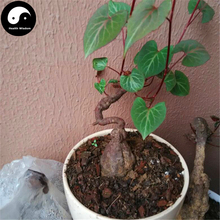 Buy Real Polygonum Multiflorum Seeds 200pcs Plant Herb He Shou Wu Grow Bonsai Fo-Ti(China)