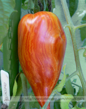 'Speckled Roman' Organic Heirloom Tomato Seeds, Professional Pack, 100 Seeds / Pack, Lycopersicon Lycopersicum Sweet Fruits