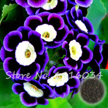 10 Pcs/bag Picotee Blue Morning Glory Seeds Very Easy Grow Rare Petunia Flowers Bonsai Plant for Home Garden