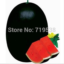 30seeds/bag Shouguang Vegetable Seeds black tyrant king super sweet watermelon large heavy anti- yielding super sweet watermelon(China)