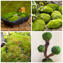 200pcs sphagnum moss bonsai moss seeds Lovely moss ball decorative grass seeds ornamental-plant potted DIY home garden plant(China)