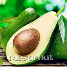 10pcs New Rare Green Avocado Seed Very Delicious Pear Fruit Seed Very Easy Grow For Home Garden  Free Shipping