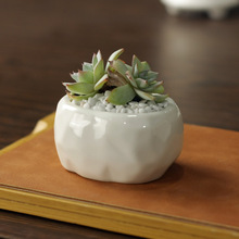 7.5*6*4cm Simple white meat lost more lovely oval ceramic pot pots stone cutting pattern can small wholesale freeshipping