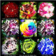 Freeshipping (THIS ORDER INCLUDE 9 PACKS EACH COLOR 100 SEEDS)CHINESE ROSE SEEDS- Rainbow Black Red Purple Blue chinese sky rose