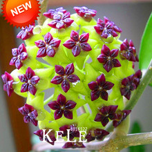 Loss Promotion!Hoya Seeds,Potted Flowers Bonsai plants Hoya Seed, Orchid Seed DIY Home Garden 100 Particles/lot,#J9KRQH
