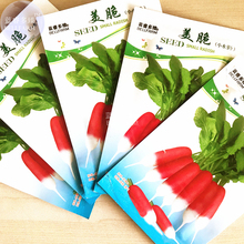 BELLFARM Radish Red Body White Root Organic Vegetable Seeds, 5 packs, 60 seeds/pack, swwet crisp fast growing vegetables