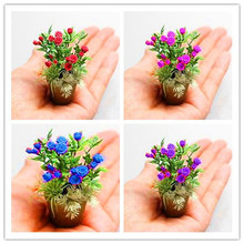 2017Special products!! 100 rare bonsai mini rainbow flower seeds, 6 varieties of roses mixed seed,full color plant.