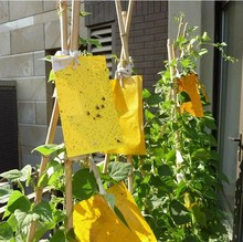 10pcs/lot Yellow Sticky Glue Flying Pest Insect Papers Traps Catchers Strong Flies Traps Bed Bugs Sticky Board 4 Szies