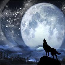 customized 3D photo wallpaper wolf Full moon night mural bedroom children room mural living room wallpaper