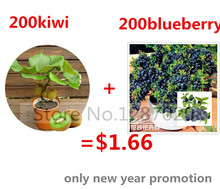 200 bonsai kiwi seeds send 200 fresh blueberry seeds for gift fruit and vegetable seeds for flower pot planters(China)