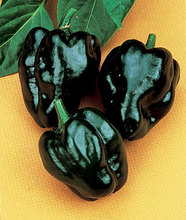 Chili,Pepper, Hot, Poblano (Ancho),from dark green to deep red,mildly pungent.Fruit and Vegatable seeds.For Home Garden-100seeds(China)