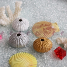 Free Shipping(20pcs/lot)3 colors Small Green Sea Urchin Natural Shell Conch Beach Wedding Decor Coastal Home Decor DIY Material(China)