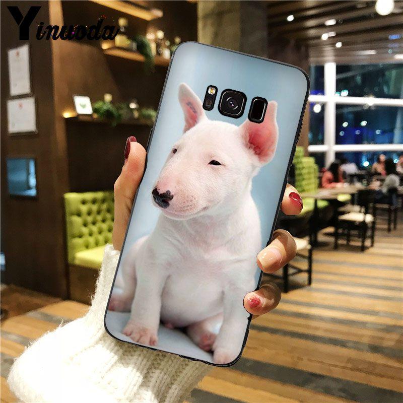bullterrier bull terrier dog