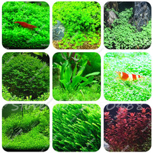 Hot Sale 500/1000pcs New aquarium grass seeds (mix) water aquatic plant seeds family easy plant seeds for decorate the aquarium