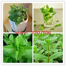 1 bag free shipping 400 NON-GMO seeds cost cooking minty medicinal plant gardens DIY