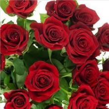 China Rare red Rose Flower Seeds - 10 pcs / lot