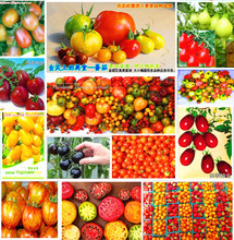 50 pcs/bag red pear tomatoes vegetable seeds for DIY home garden Free shipping(China)