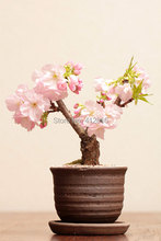 Hot selling 20pcs sakura seeds bonsai flower pots planters easy to plant DIY other home product rare flower seeds
