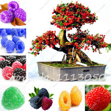 Hot 100 Pcs Mulberry Seeds Sweet Black Berry Giant Plants Miracle Fruit Seed Tohum Rare Tree Bonsai Garden Bush DIY Home Garden(China)