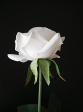 artificial rose real touch red rose with custom stems floral arrangement boutonniere supply white blue pink(China)
