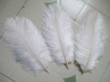 perfect! Sales 10pcs15-20CM Beautiful white ostrich feather, DIY jewelry accessories, wedding decorations(China)