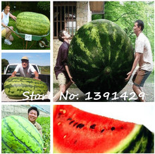 2017 New 30Pcs giant Watermelon Seeds ,Sweet Taste Vegetables and fruit seeds, very big delicious, Garden Plants free shipping(China)